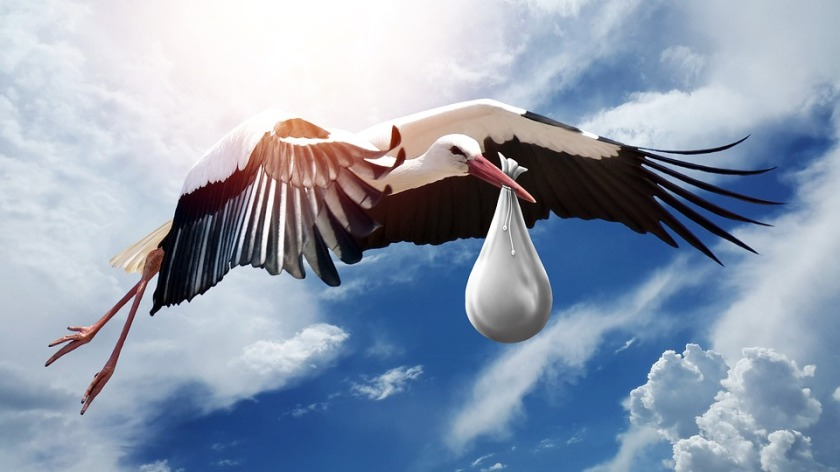 storch bird-3058712_960_720