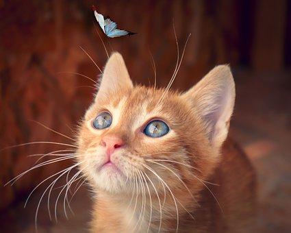 cat-4277400__340